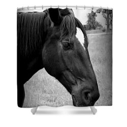 Shower Curtain featuring the photograph Ebony Beauty by Laurie Perry