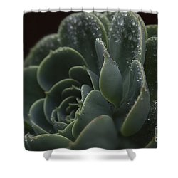 Echeveria Elegans X Lola - Crassulaceae Shower Curtain by Sharon Mau