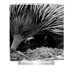 Echidna Shower Curtain