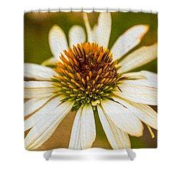 Echinacea Fading Beauty Shower Curtain by Omaste Witkowski