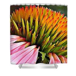 Echinacea In  Watercolors  Shower Curtain by Chris Berry