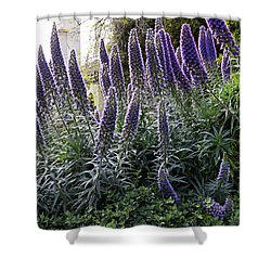 Shower Curtain featuring the photograph Echium And Tower by Kate Brown