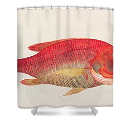 Eekan Bambangan Shower Curtain
