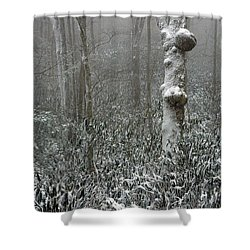 Eerie Forest Winter Shower Curtain by John Haldane