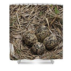Eggs In Killdeer Nest Shower Curtain
