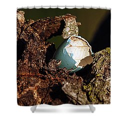 Eggs Of Nature 1 Shower Curtain by David Lester