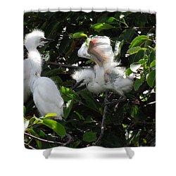 Egret Chicks Shower Curtain