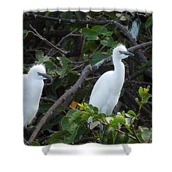 Egret Chicks Waiting To Be Fed Shower Curtain