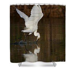 Egret Diving For Lunch Shower Curtain by Ruth Jolly