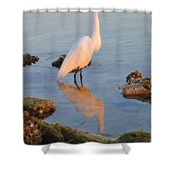 Egret - Dunedin Florida Shower Curtain by Bill Cannon