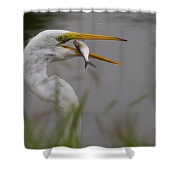 Shower Curtain featuring the photograph Egret Having Lunch by Jerry Gammon