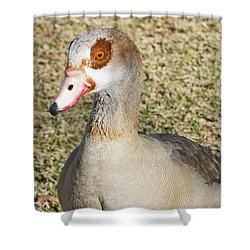Egyptian Goose  Shower Curtain by Shoal Hollingsworth