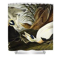 Eider Ducks Shower Curtain by John James Audubon