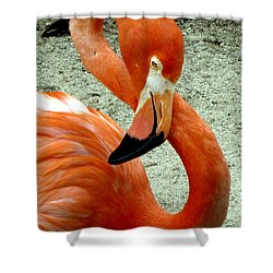 Figure Eight Flamingo Shower Curtain