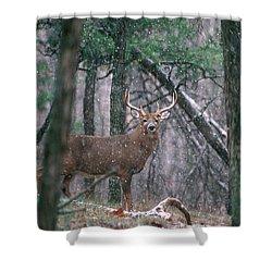 Eight Point Whitetail Deer Buck Shower Curtain
