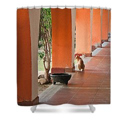 Shower Curtain featuring the photograph El Gato by Marcia Socolik