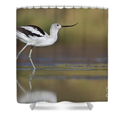 Elegant Avocet Shower Curtain