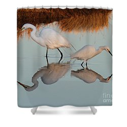 Elegant Big And Small Great White And Snowy Egrets Shower Curtain