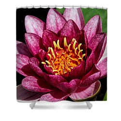 Elegant Lotus Water Lily Shower Curtain by Denyse Duhaime