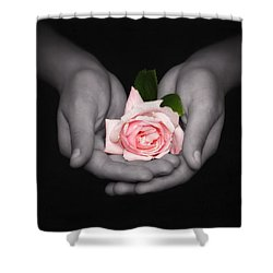 Shower Curtain featuring the photograph Elegant Pink Rose In Hands by Tracie Kaska