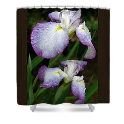 Elegant Purple Iris Shower Curtain