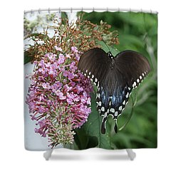 Elegant Swallowtail Butterfly Shower Curtain