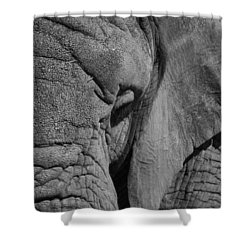 Elephant Bw Shower Curtain