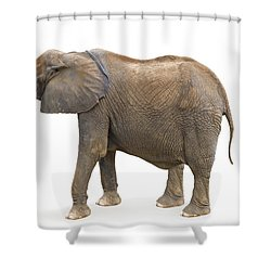 Shower Curtain featuring the photograph Elephant by Charles Beeler