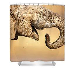 Elephant Drinking Shower Curtain by Johan Swanepoel