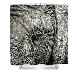 Elephant Shower Curtain by Elena Elisseeva