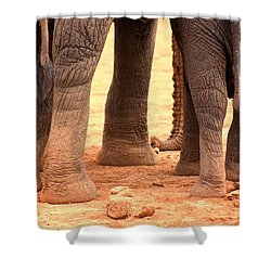 Shower Curtain featuring the photograph Elephant Family by Amanda Stadther