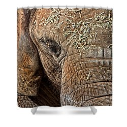Elephant Never Forgets Shower Curtain by Miroslava Jurcik