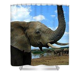 Elephant Posing Shower Curtain by Ramona Johnston
