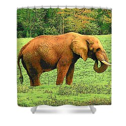 Shower Curtain featuring the photograph Elephant by Rodney Lee Williams