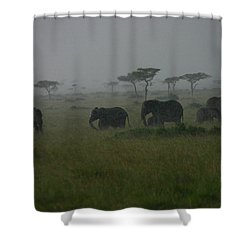 Elephants In Heavy Rain Shower Curtain by Menachem Ganon