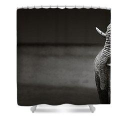 Elephants Interacting Shower Curtain by Johan Swanepoel