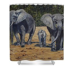 Elephants With Calf Shower Curtain by Caroline Street