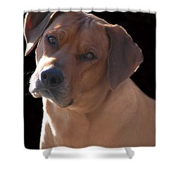Shower Curtain featuring the photograph Eli by Mim White