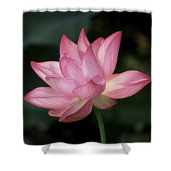 Shower Curtain featuring the photograph Elizabeth by Cindy Lark Hartman