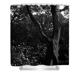 Shower Curtain featuring the photograph Elizabethan Gardens Tree In B And W by Greg Reed