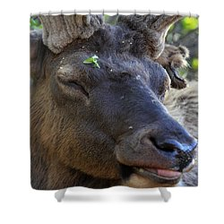 Elk Chuckle Shower Curtain