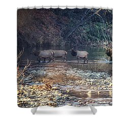 Elk Crossing The Buffalo River Shower Curtain by Michael Dougherty