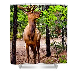 Shower Curtain featuring the photograph Elk - Mather Grand Canyon by Bob and Nadine Johnston