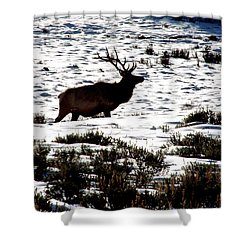 Elk Silhouette Shower Curtain by Sharon Elliott