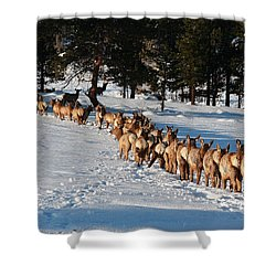 Elk Train Shower Curtain