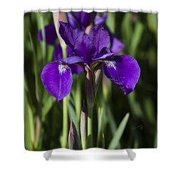 Eloquent Iris Shower Curtain