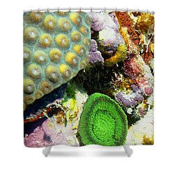 Emerald Artichoke Coral Shower Curtain