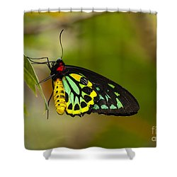 Emerald Beauty Shower Curtain by Mike  Dawson