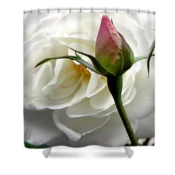 Shower Curtain featuring the photograph Emergence by Deb Halloran