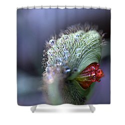 Shower Curtain featuring the photograph Emergence by Joe Schofield